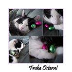 Auch Katzen lieben Ostern ;-)