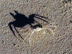 Auch kleine Krabben ...