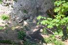 Auch mal ein Suchbild: Wo ist der Schneeleopard :-)