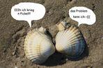 auch muscheln haben ein pickelproblem;-)