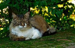 Auch Nachbar`s Katze ....