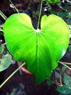 Auch Pflanzen haben ein Herz!