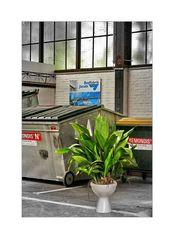 ... auch Pflanzen sitzen auf dem Topf
