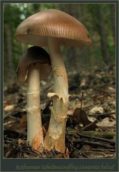 Auch Pilze haben Gefühle ...