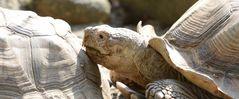 Auch Schildkröten haben eine Pause verdient