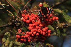 Auch Schmetterlinge...