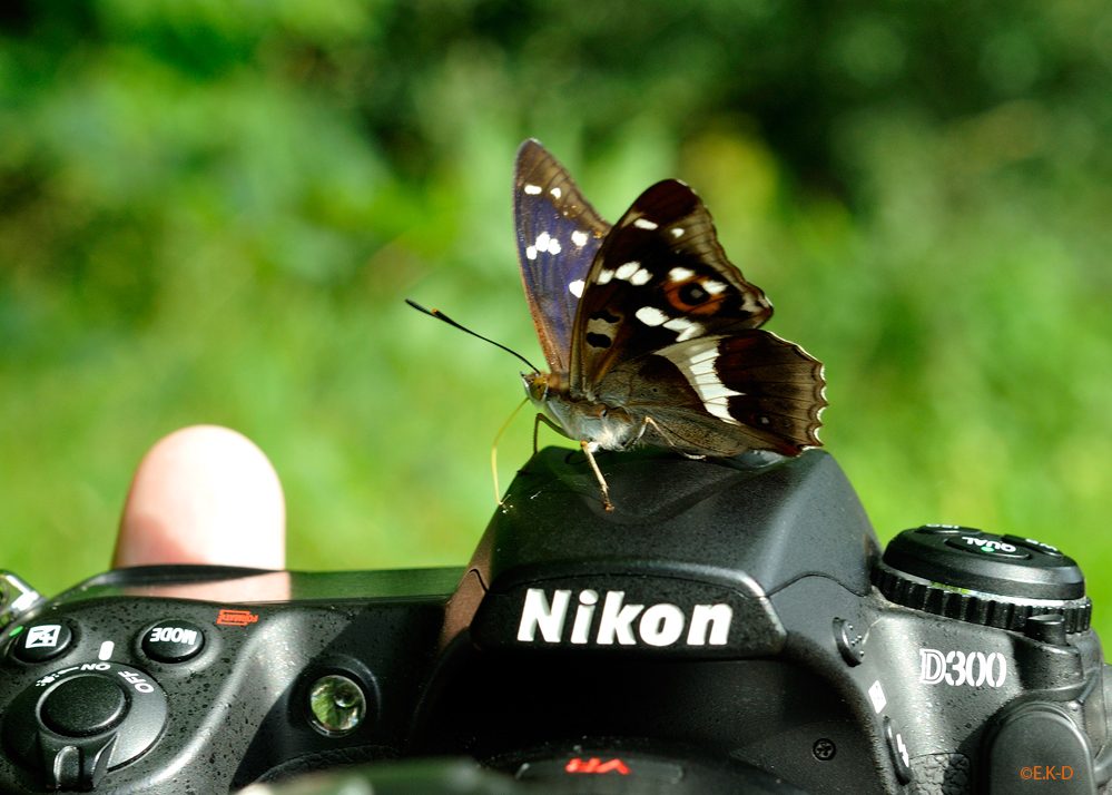 ...auch Schmetterlinge bevorzugen Nikon -:)))
