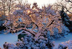 """Auch Schnee kann """"Farbe"""" zeigen"""