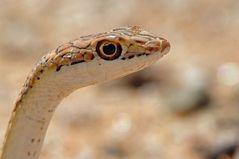 Namibia Wildlife - 2