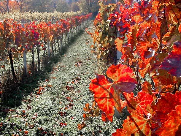 Auch solche Farben kann der November haben