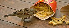 Auch Spatzen mögen Fastfood! von Uwe Vollmann