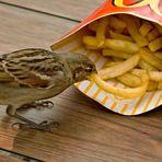 Auch Spatzen mögen Fastfood!