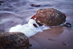Auch Steine bieten Lebensraum