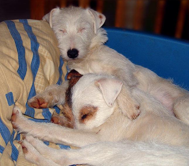 Auch Terrier können müde sein ;-)