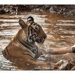 Auch Tigerdamen lieben Spa