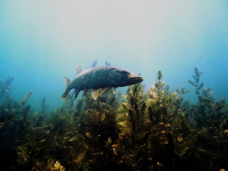 auch Unterwasser....