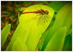 Auch viele Insekten