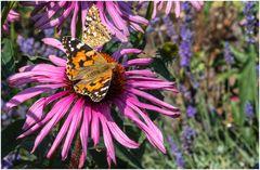 auch viele Schmetterlinge