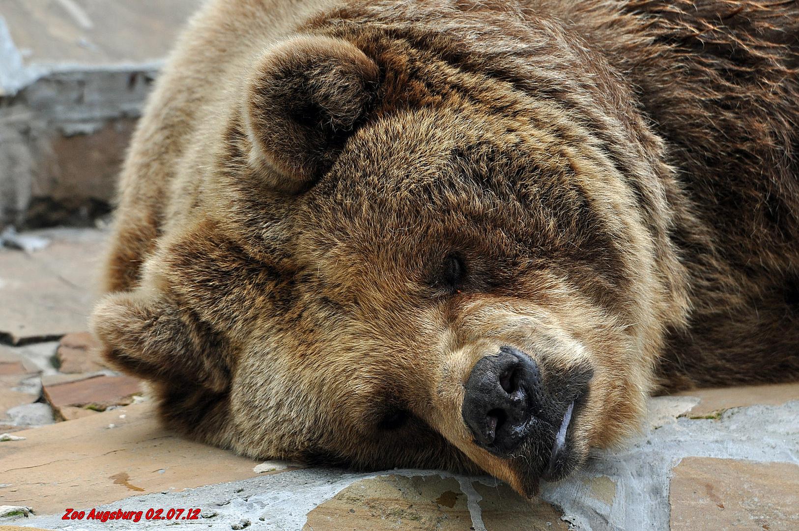..auch wenn er scheinbar schläft..