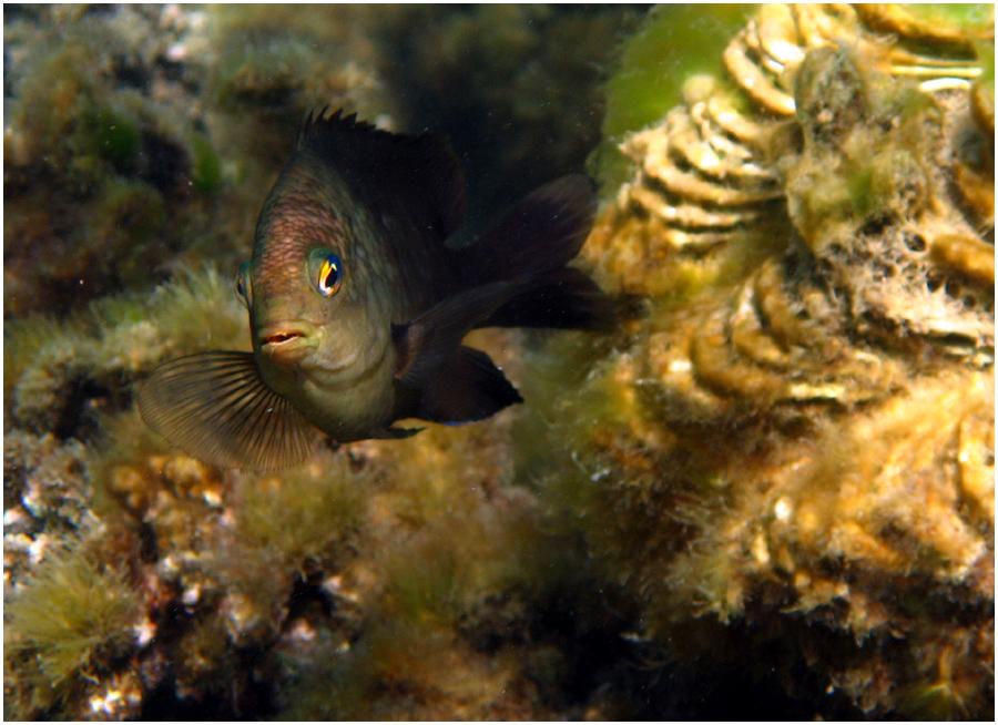 Auch wenn es schon viele Schnorchler und Taucher gibt am Roten Meer ...