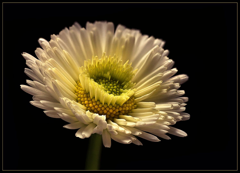 Auch winzige Blumen können mit Schönheit und Charme beeindrucken