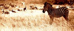 Auch Zebras chillen...