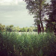 Auenlandschaft im Rheingau - Mariannenaue