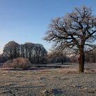 - Auenlandschaft im Winter -