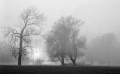 Auenlandschaft / Nebel (2)