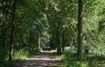 Auenwald -das letzte Bild