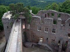 Auerbacher Schloss - Der Baum mitten in der Mauer