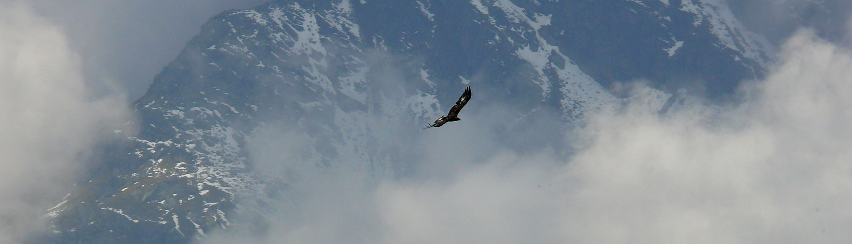 Auf Adlersschwingen