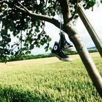 auf Bäumen