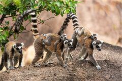 Madagaskar 10.2017