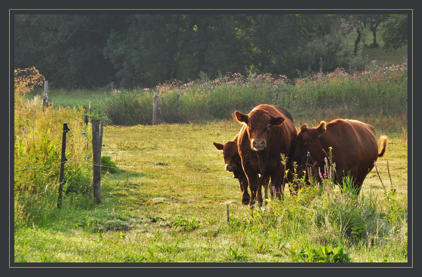 auf da Viehwoad