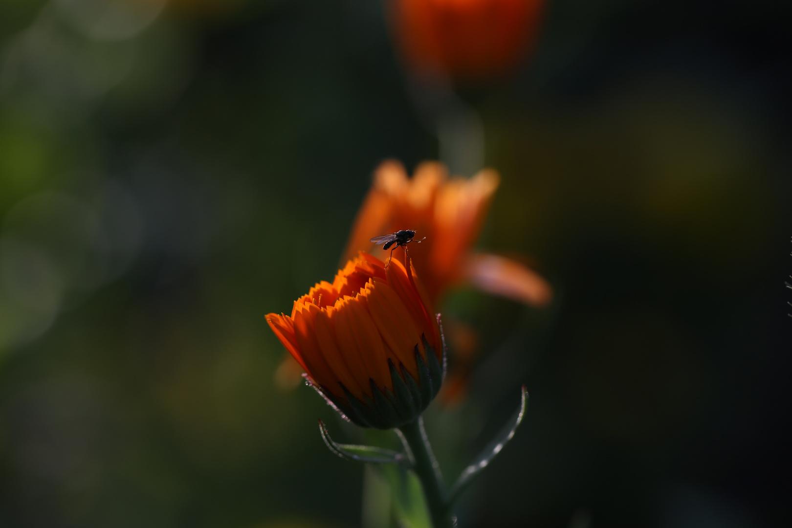 auf dem abendbrot foto bild natur fliegen pflanzen bilder auf fotocommunity. Black Bedroom Furniture Sets. Home Design Ideas