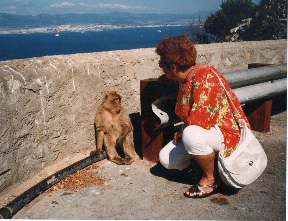 Auf dem Affenfelsen von Gibraltar ... noch etwas scheu !   ...  Siehe auch unten !