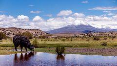 Auf dem Altiplano
