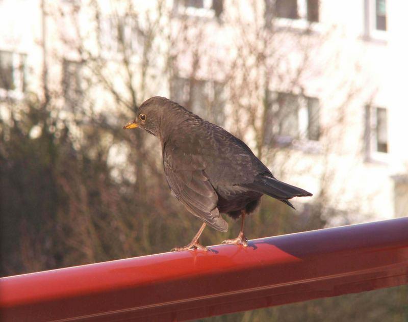 - auf dem Balkon 02 -