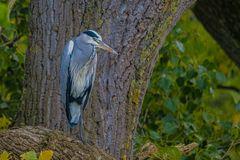 Auf dem Baum-