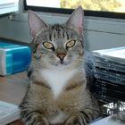 Auf dem Computertisch...