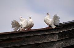 ... auf dem Dach ... ein Flirt ???