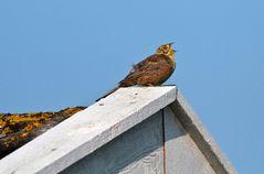 Auf dem Dach zuhause