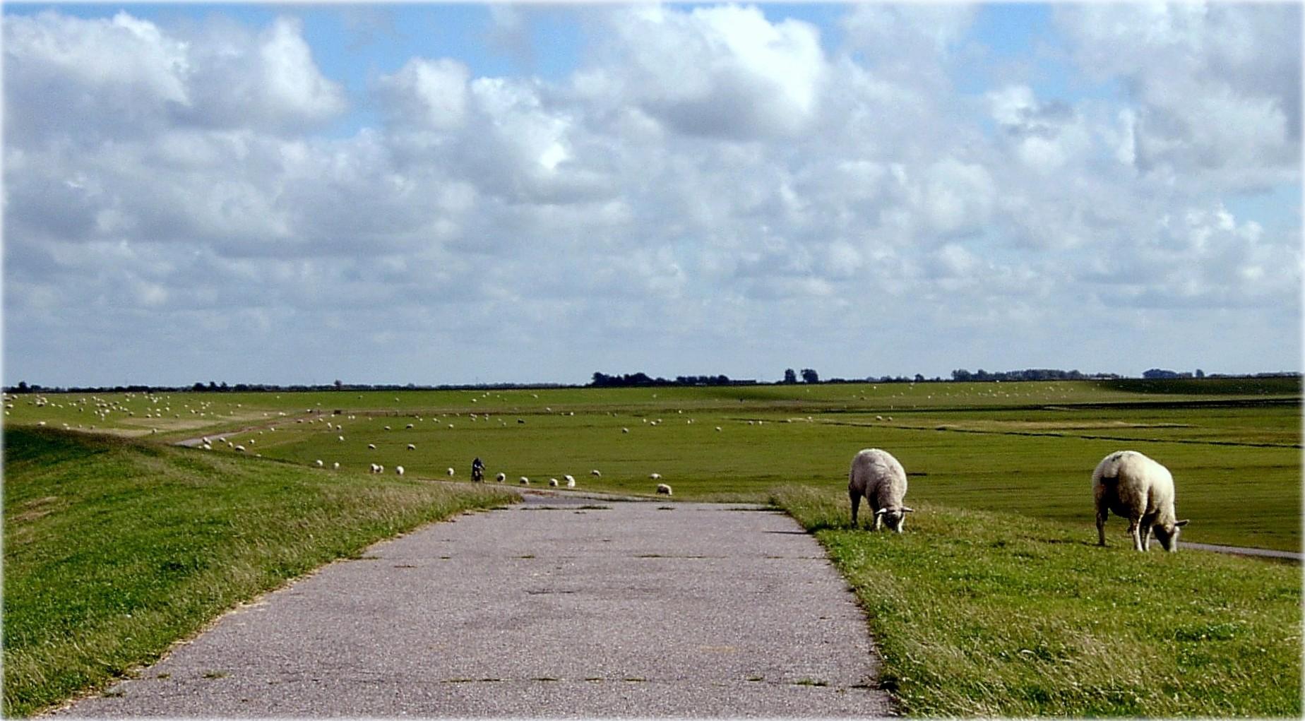 Auf dem Deich in Nordfriesland