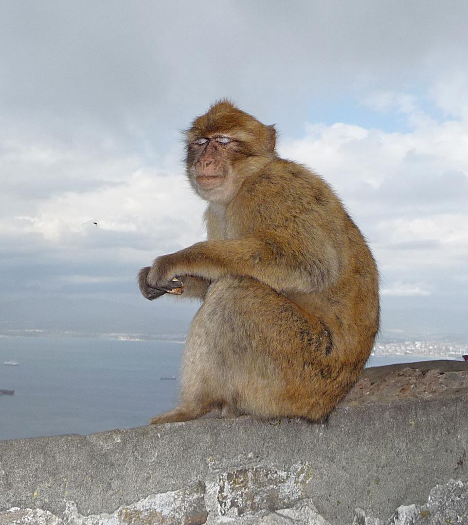 Auf dem Fels von Gibraltar