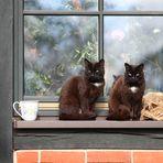 Auf dem Fensterbrett