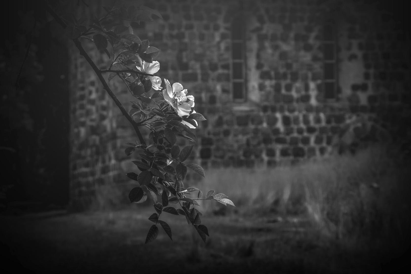 Auf dem Friedhof von Kuhz