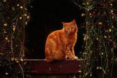 Auf dem Gartentor