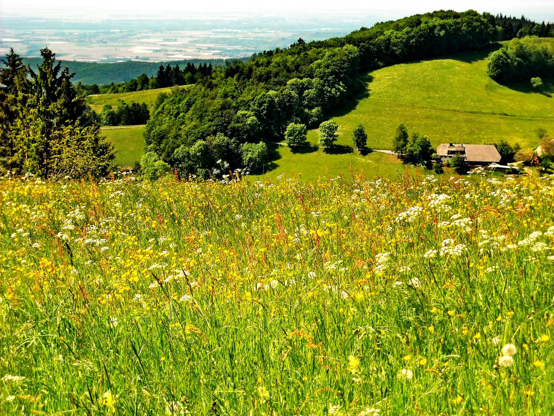 Auf dem Geiersnest mit Blick auf das Rheintal