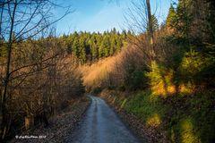 Auf dem Jägerweg in Kappelwindeck